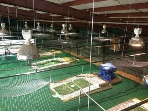 PITTSBURGH PIRATES<br />Retractable Batting Cages<br />Pirate City - Bradenton, FL